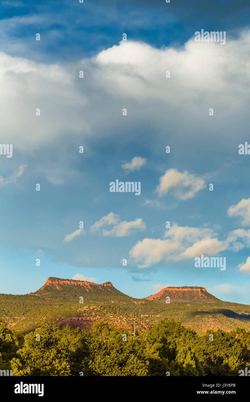 Bears Ears Buttes and the surrounding pinyon-juniper forest in Bears Ears National Monument, viewed from within Stock Photo