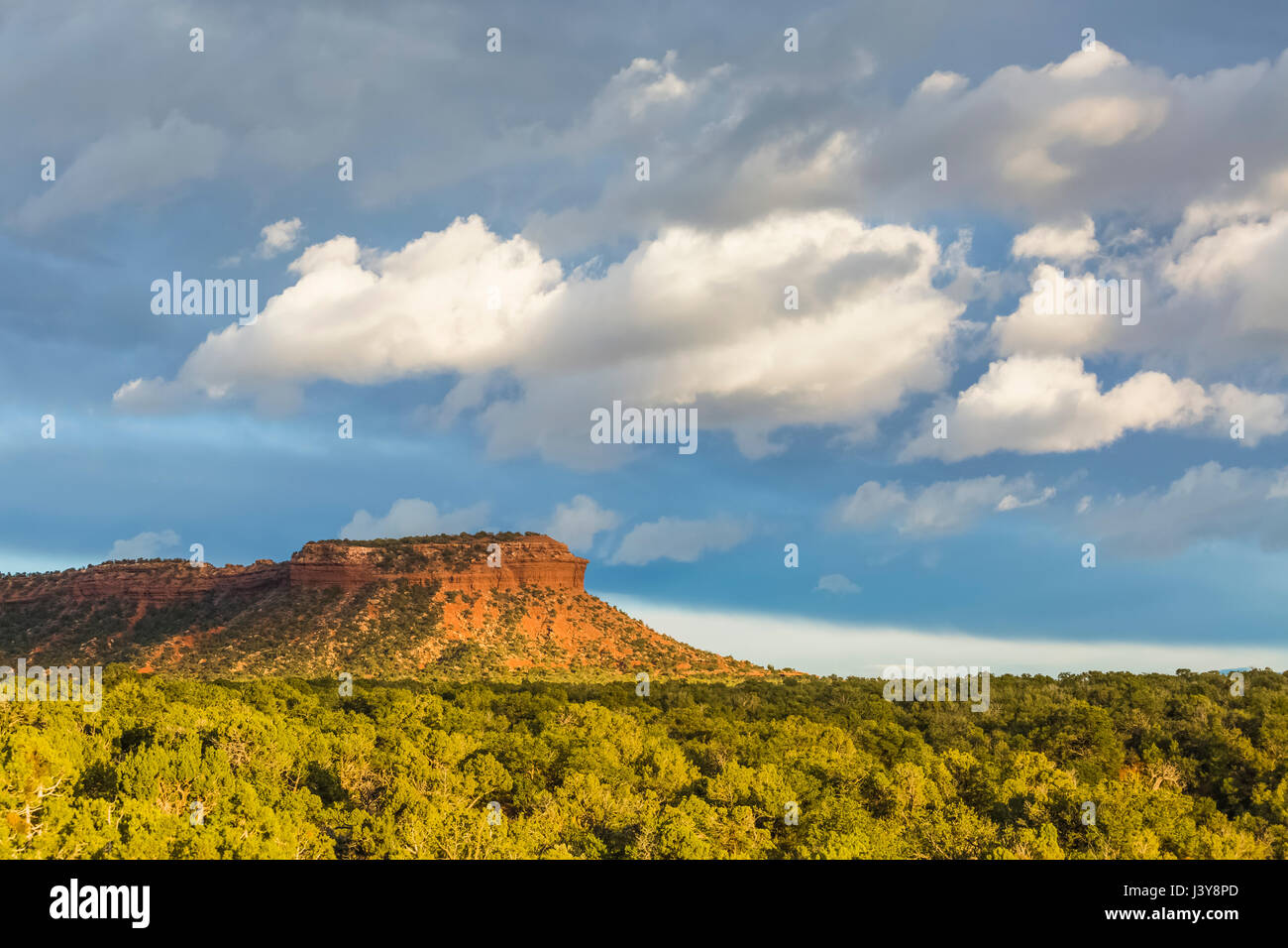 Mesa and pinyon-juniper forest in Bears Ears National Monument, southern Utah, USA Stock Photo