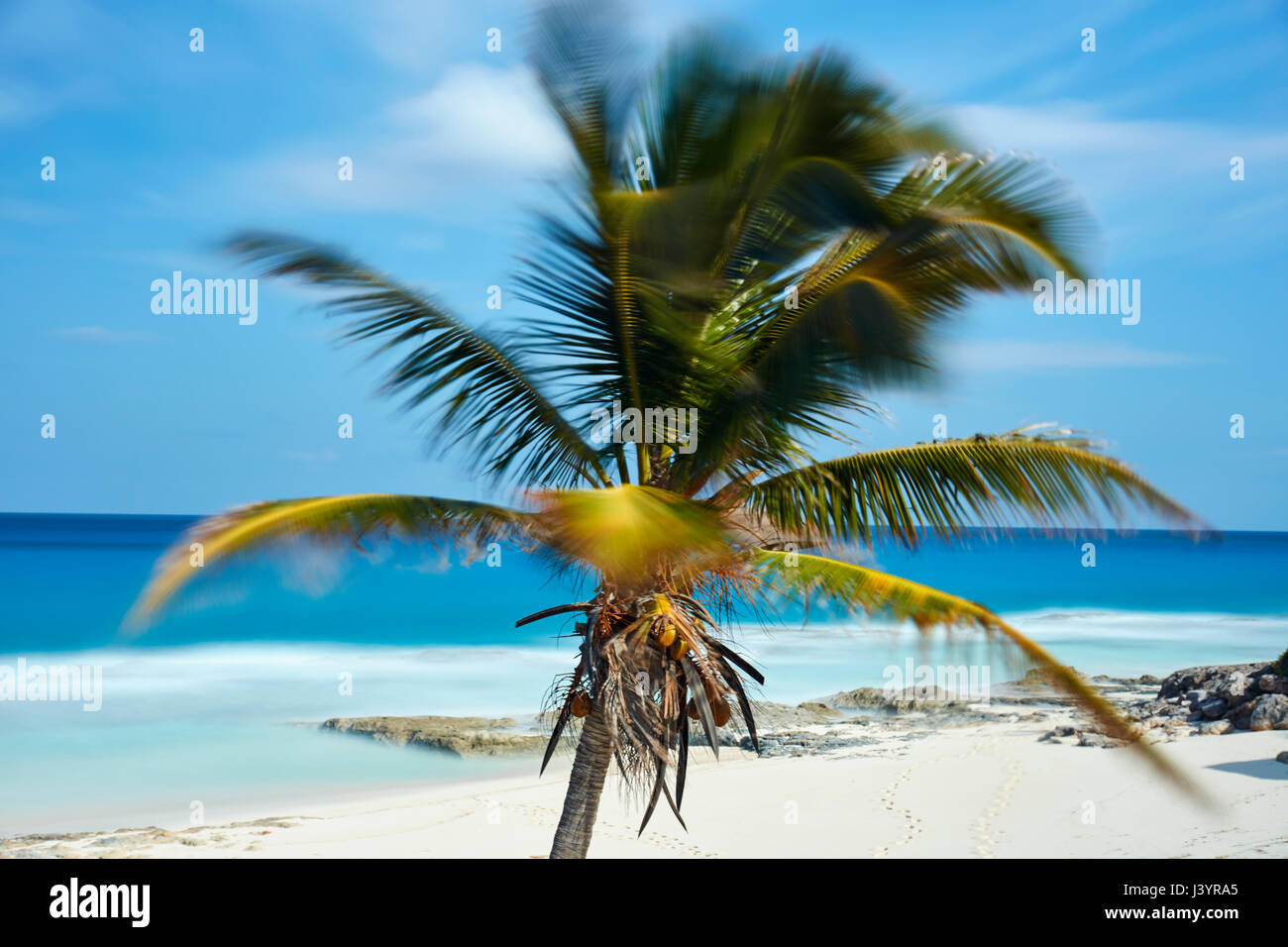 Coconut palm tree on the beach - Stock Image