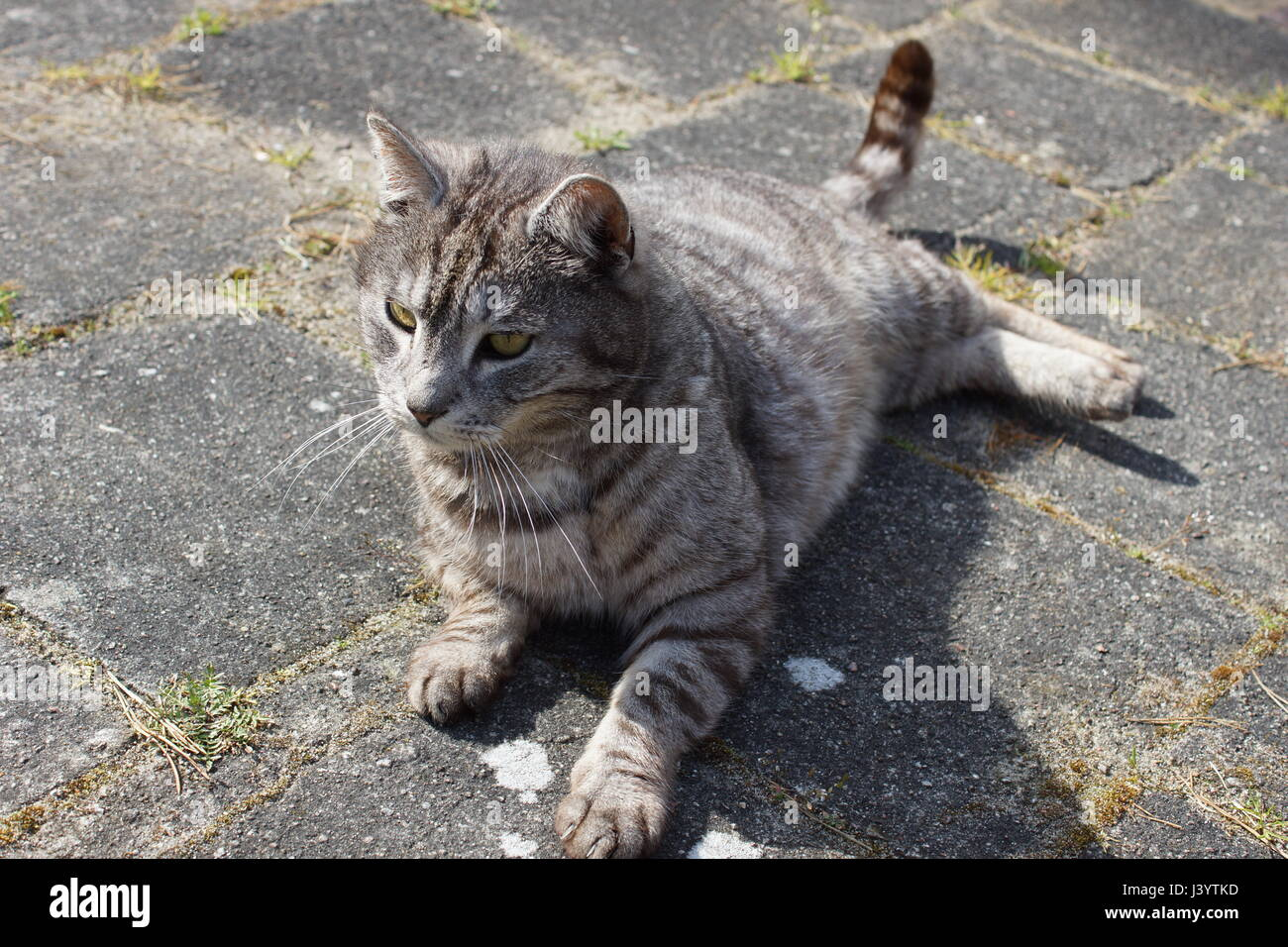 Homeless cat in nature - Stock Image