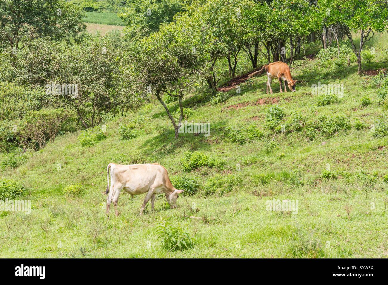 Muçum Rio Grande do Sul fonte: c8.alamy.com
