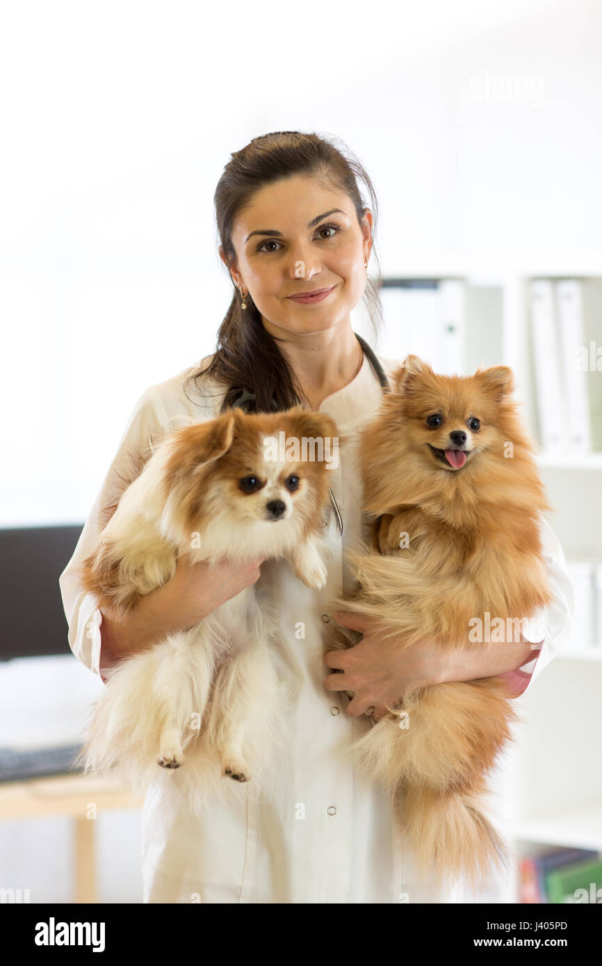Happy vet with dogs - Stock Image