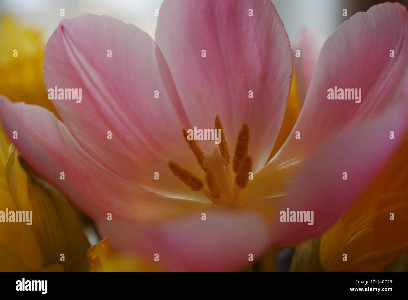 Detail of a beautiful flower - Stock Image