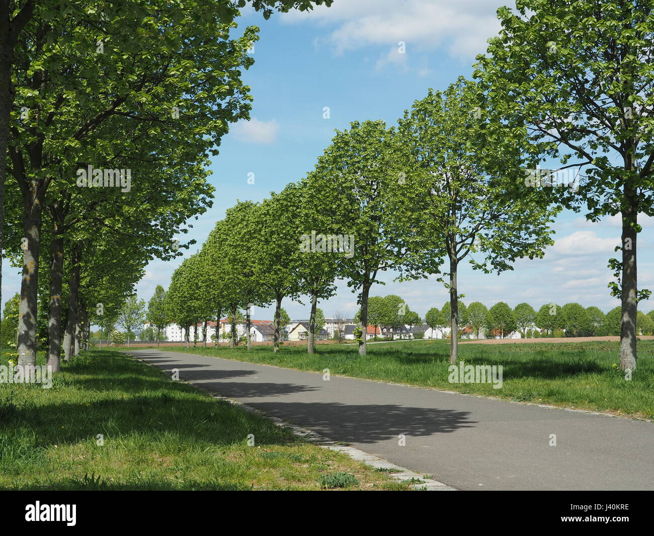 Tree lined streed in a park, allee Stock Photo
