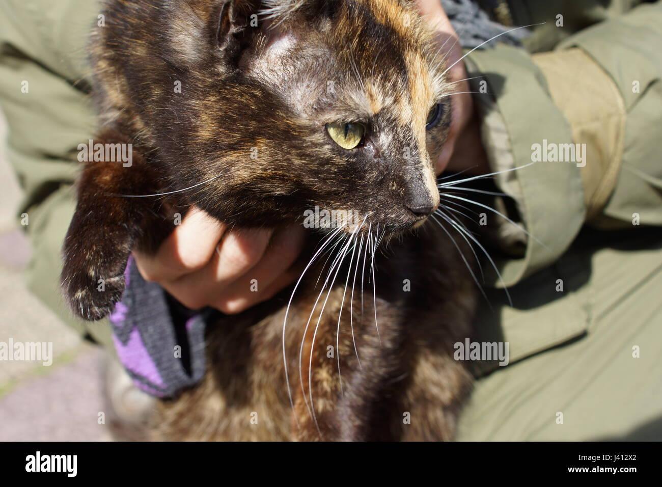 Black brown cat - Stock Image