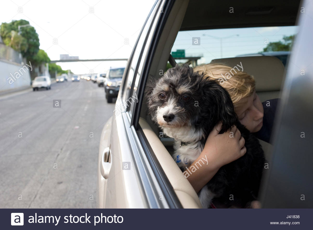 Boy with blonde hair hugging his pet dog that has its head out the window of the family car - Stock Image