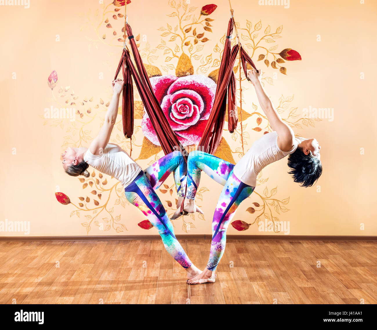 Two Young woman doing antigravity yoga back bending in hammock at wellness studio with rose on the wall - Stock Image