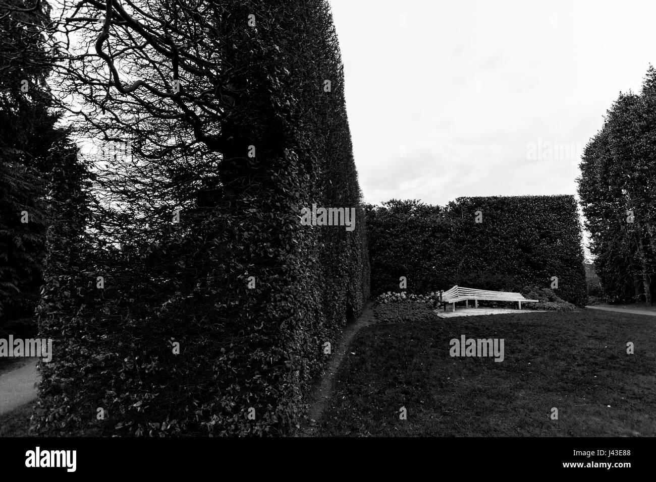 A bench in the distance against a long bush fence in black and white at the Royal Botanic Garden in Edinburgh, Scotland - Stock Image
