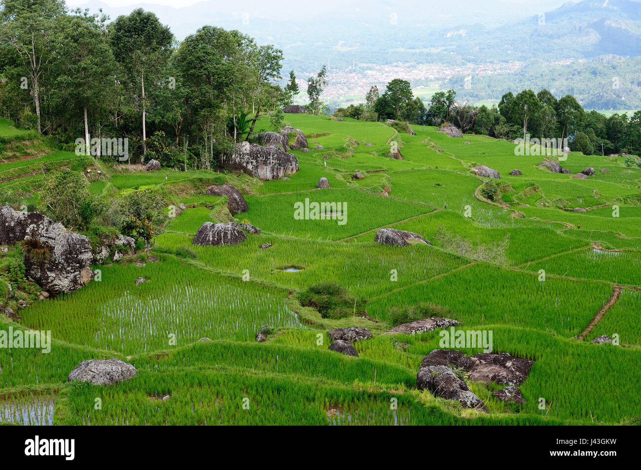 View on terrace rice fields in the beautiful land Tana Toraja being on an Indonesian island Celebes - Stock Image