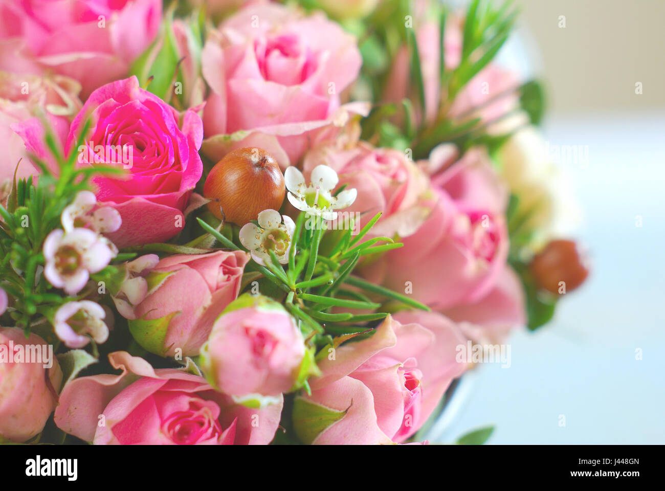 Red Pink Rose Small White Flowers Romantic Background Stock Photo
