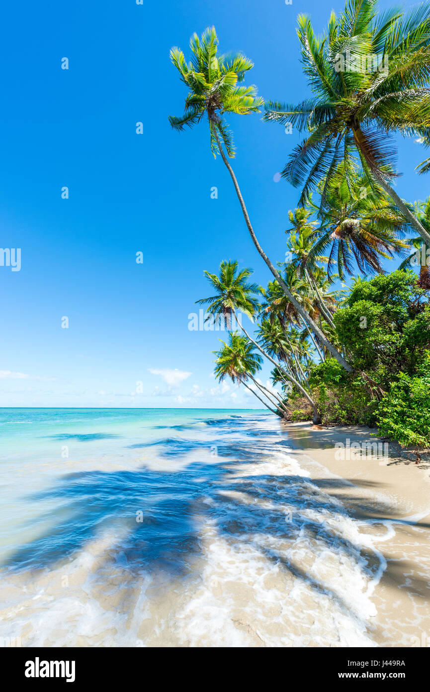 Waves wash ashore on an empty rustic beach with palm trees casting shadows on the sand in Bahia, Brazil - Stock Image