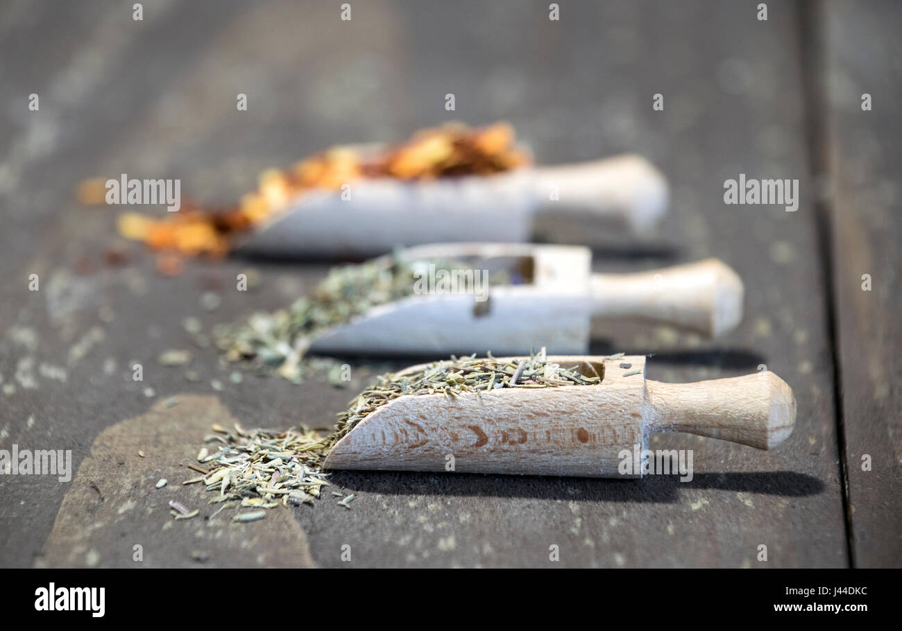 Spices on Wooden scoops - Stock Image