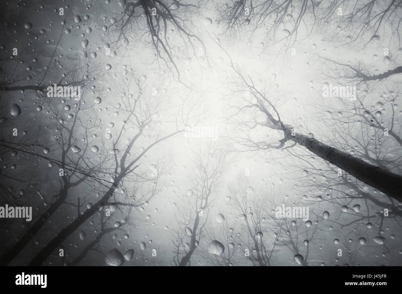 rain drops in dark forest landscape - Stock Image