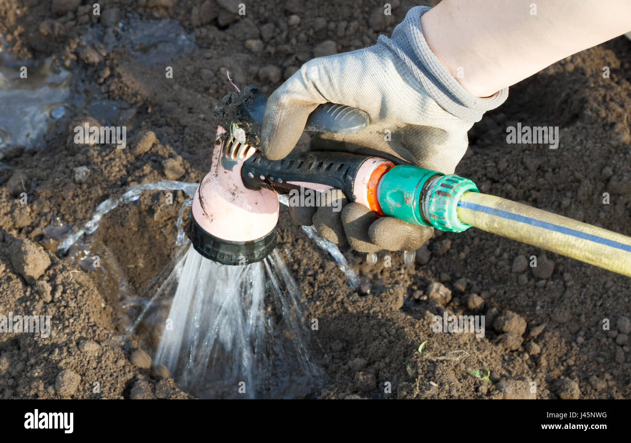 Hand with garden hose watering plants, gardening concept - Stock Image