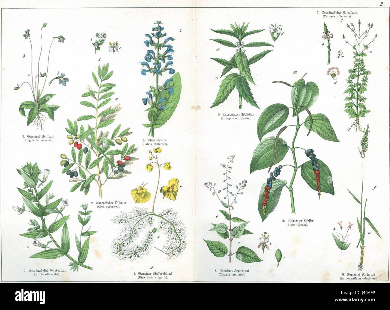 Naturgeschichte des Pflanzenreich Tafel II - Stock Image