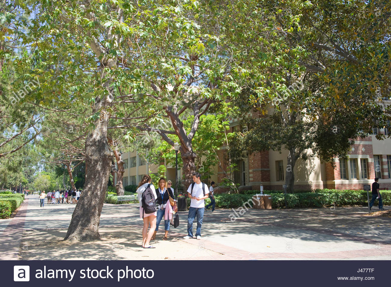 UCLA campus, Westwood, Los Angeles, California, USA - Stock Image