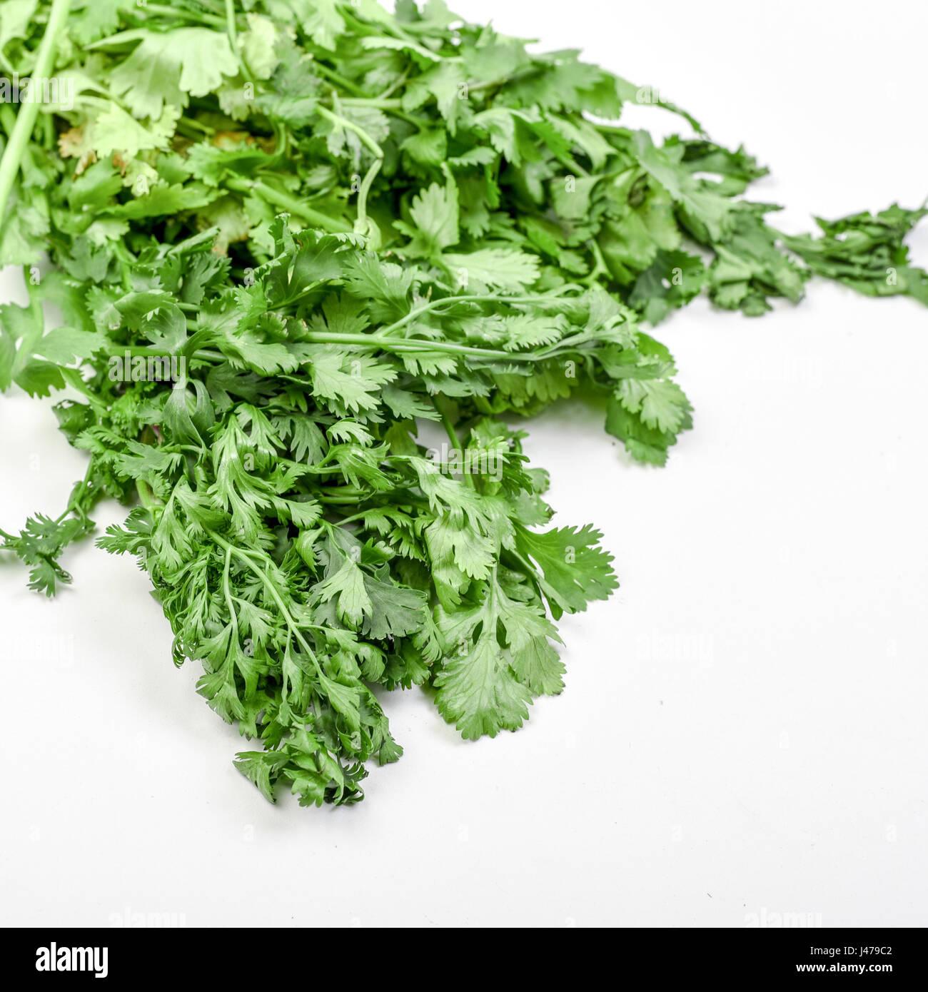 Fresh and organic Coriander (Coriandrum sativum) on white background - Stock Image