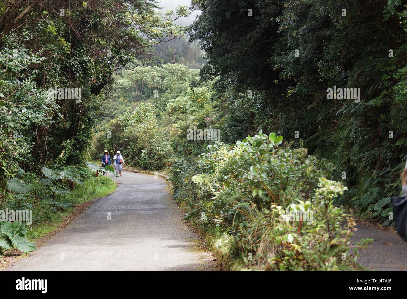 Tourist trail on the Poas volcano. The path to the crater of the volcano is covered with fog. Parque Nacional Volcan - Stock Image