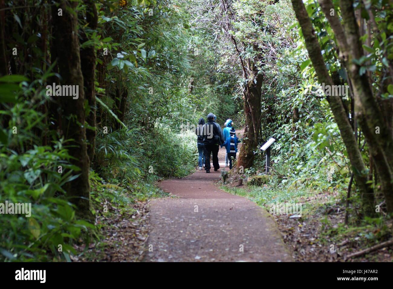 Tourist trail on the Poas volcano. Parque Nacional Volcan Poas. Costa Rica, Alajuela Province, Poas Volcano. 29th - Stock Image