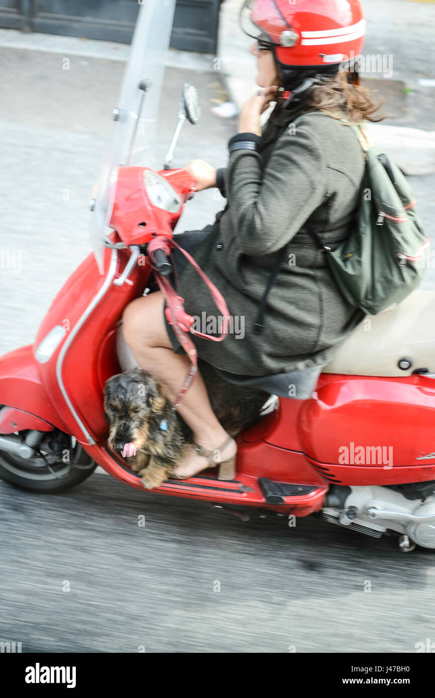 Woman on red scooter with a dog traveling - Stock Image
