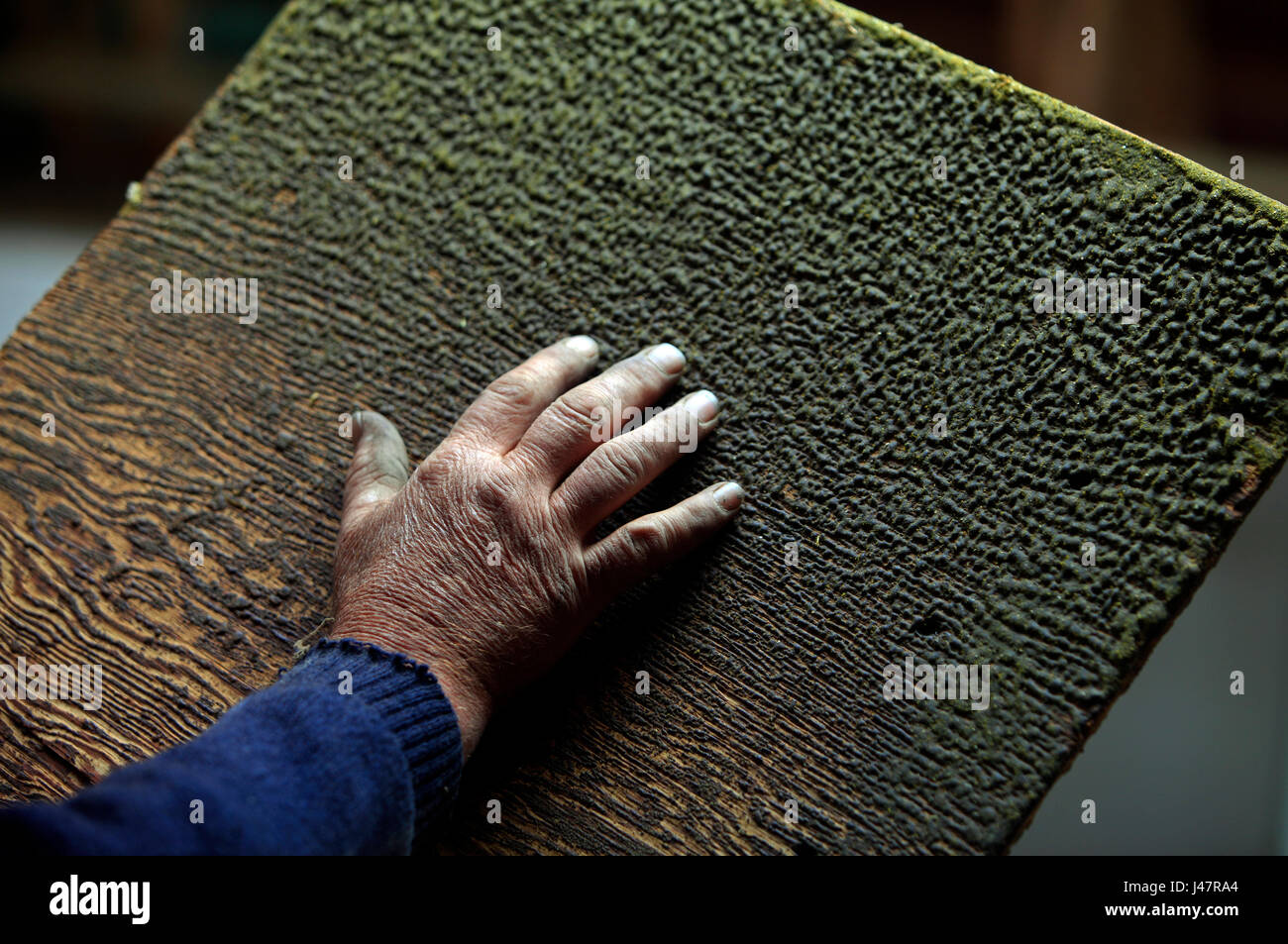 Picture by Tim Cuff - 20 October 2016 - A scraper in the hop kiln coated in resin at hop grower Peter Lines' - Stock Image