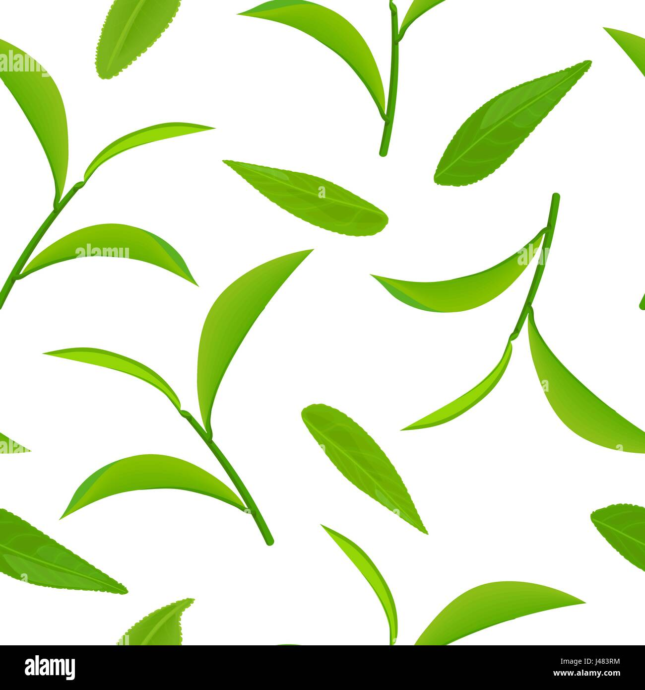 Green tea leaves and twigs seamless pattern vector isolated on green tea leaves and twigs seamless pattern vector isolated on white background thecheapjerseys Image collections