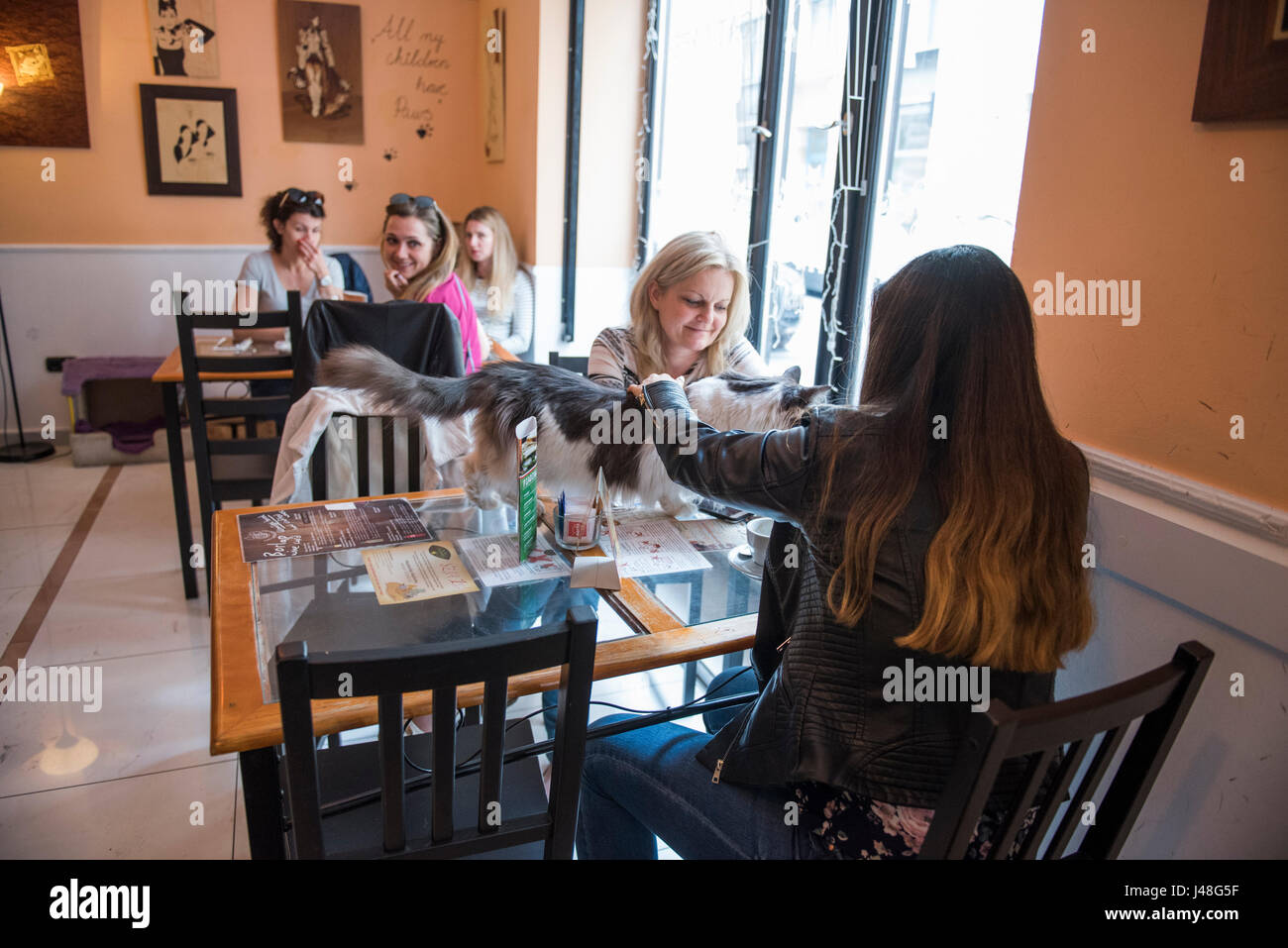 People Are Visiting This Coffee Shop In Budapest Hungary Cat Cafe Stock Photo Alamy