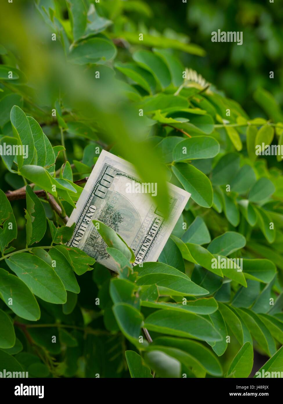 Money growing on tree environmental environment - Stock Image