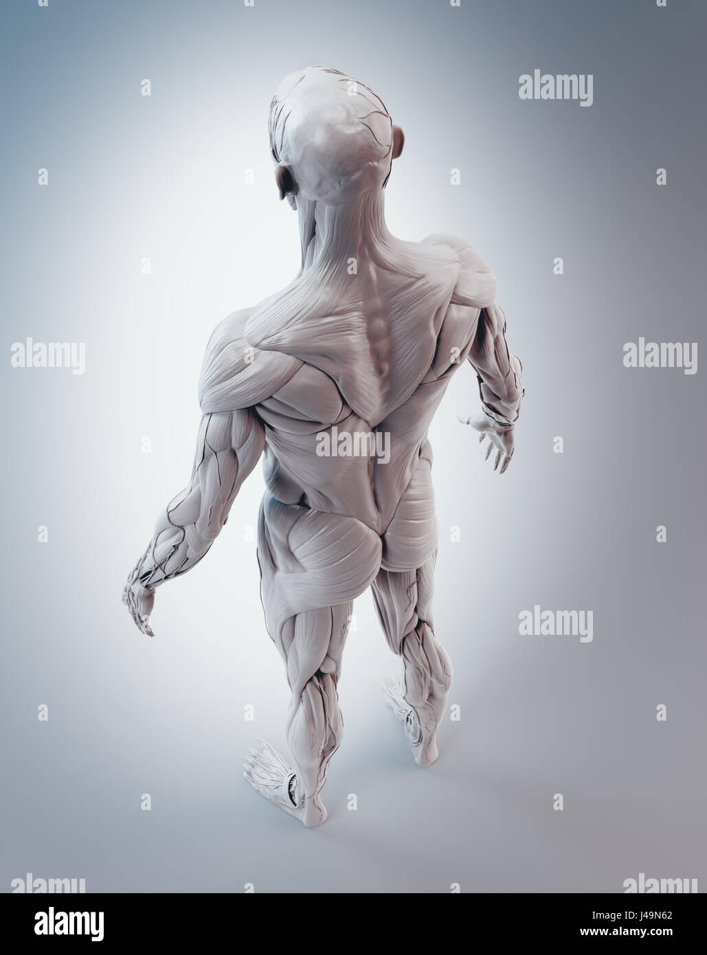 Detailed Muscle Human Anatomy 3d Illustration Stock Photo 140355770