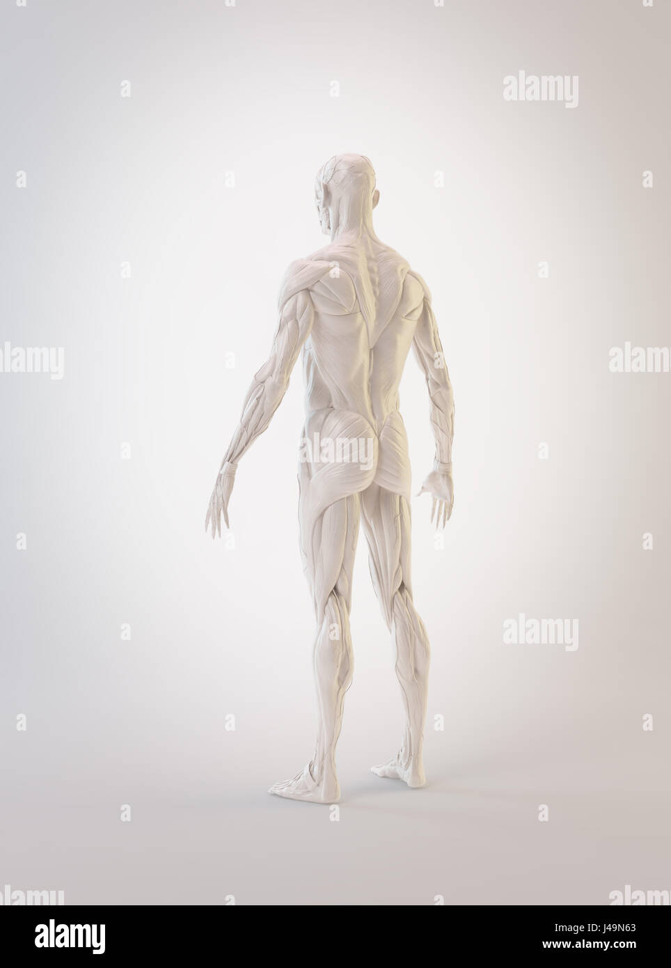 Detailed muscle human anatomy 3D illustration Stock Photo: 140355771 ...