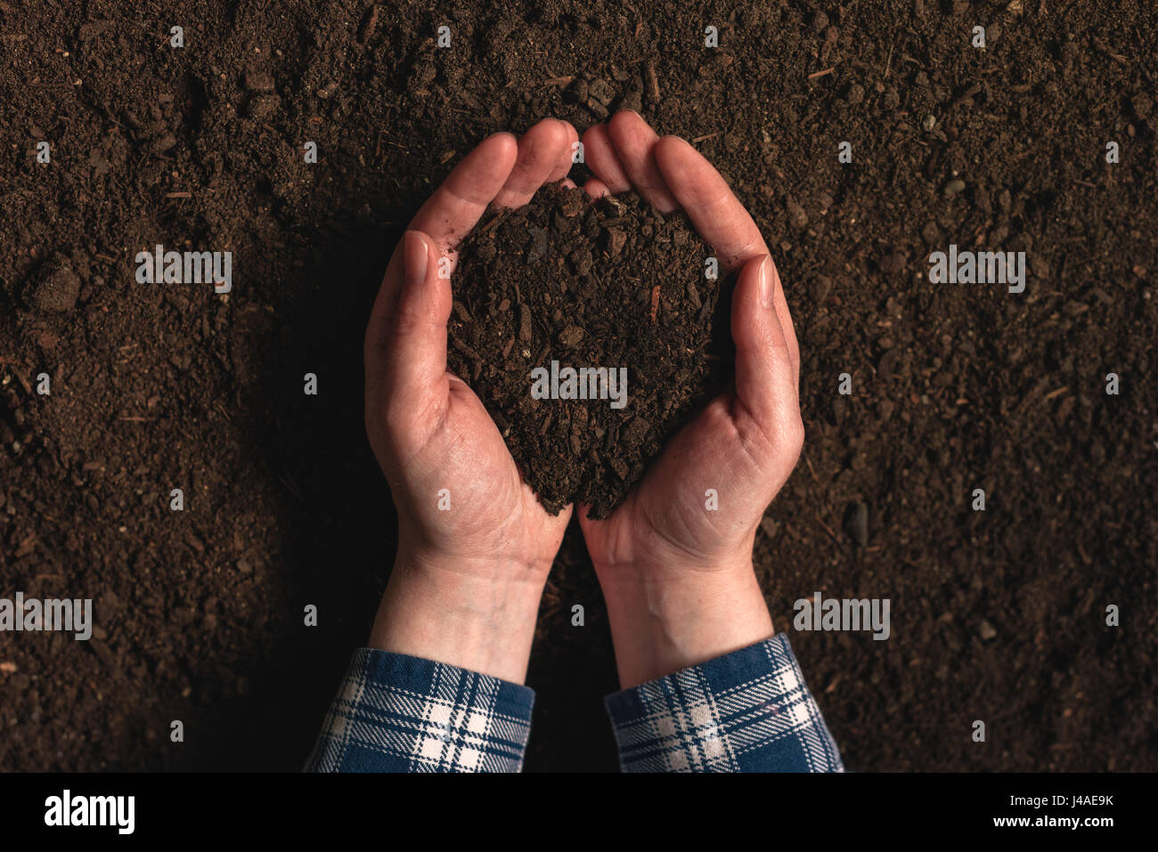 Soil fertility analysis as agricultural activity, female farmer holding arable ploughed dirt in cupped hands - Stock Image