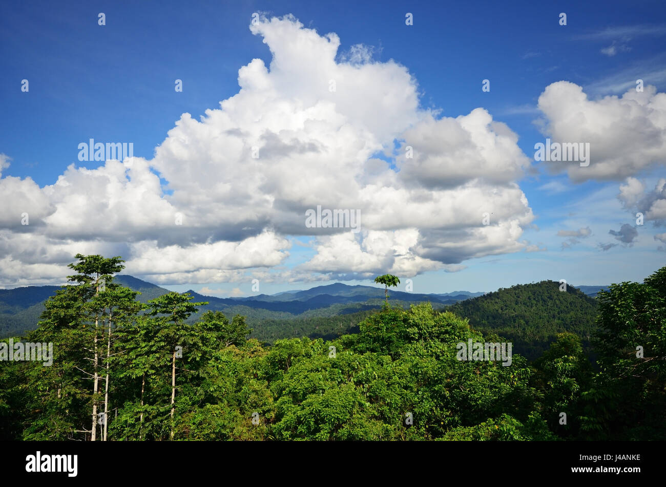 Primary jungle in Danum Valley Conservation park in Sabah Borneo, Malaysia. - Stock Image