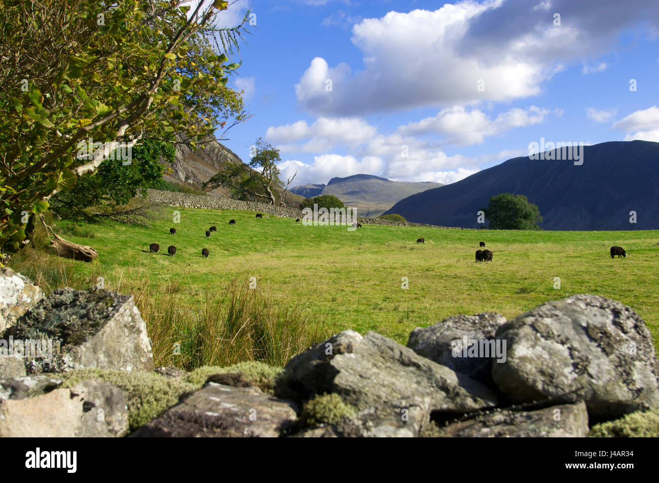 Rolling pastureland in the Lake District, Cumbria, England. - Stock Image