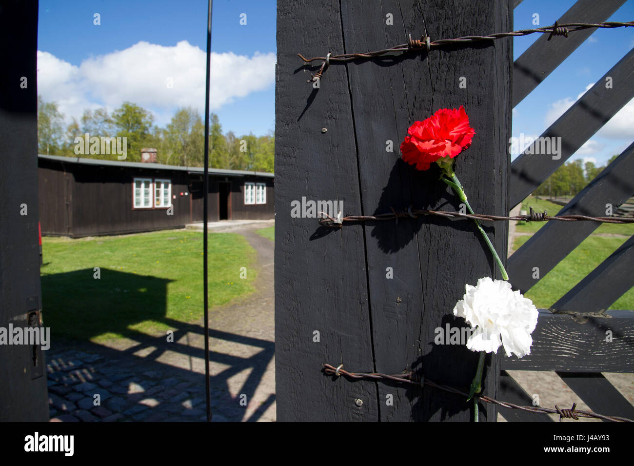 Flowers on the death gate in nazi german concentration camp kl stock flowers on the death gate in nazi german concentration camp kl stutthof in 72 anniversary of liberation of the concentration camp by the red army in m mightylinksfo