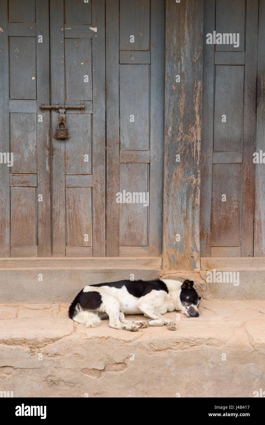 Black and white dog sleeping on the porch of a house in Bhaktapur, Nepal. - Stock Image