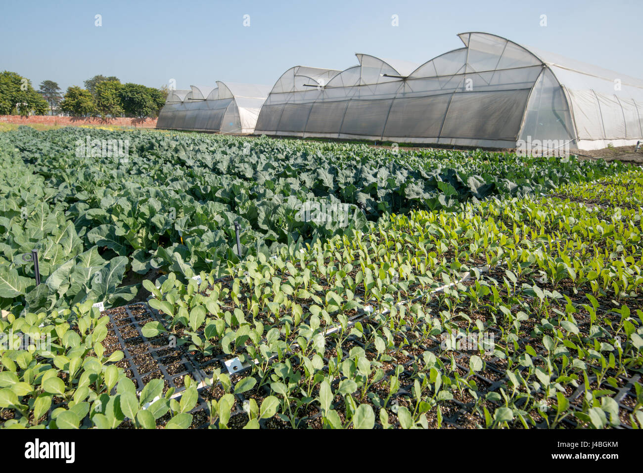 Greenhouse In Large Vegetable Garden Stock Photos