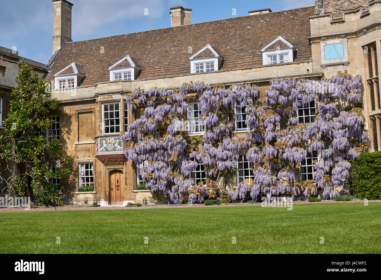Wisteria in flower on the wall of the Master's Lodge and Hall, First Court, Christ's College Cambridge - Stock Image