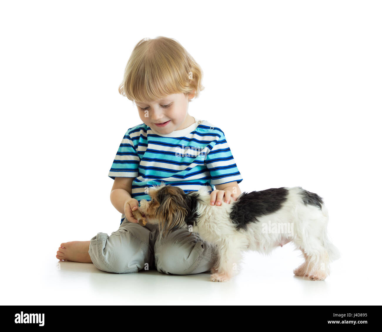 Child boy feeds dog puppy isolated on white - Stock Image