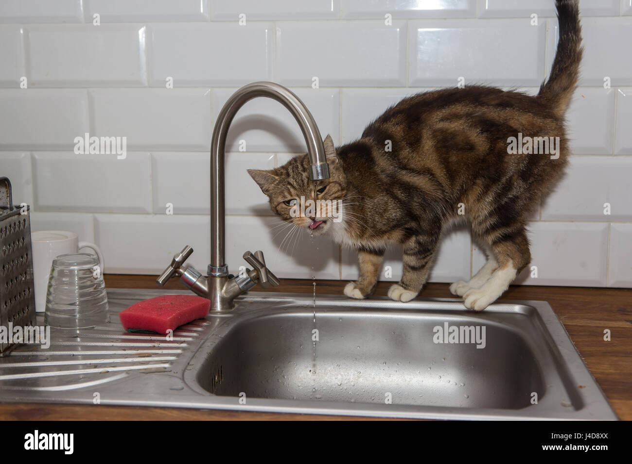 Cat drinks tap water Stock Photo: 140433970 - Alamy