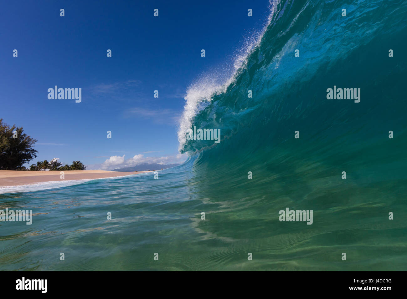 A shorebreak wave at Keiki beach on the North Shore of Oahu. - Stock Image