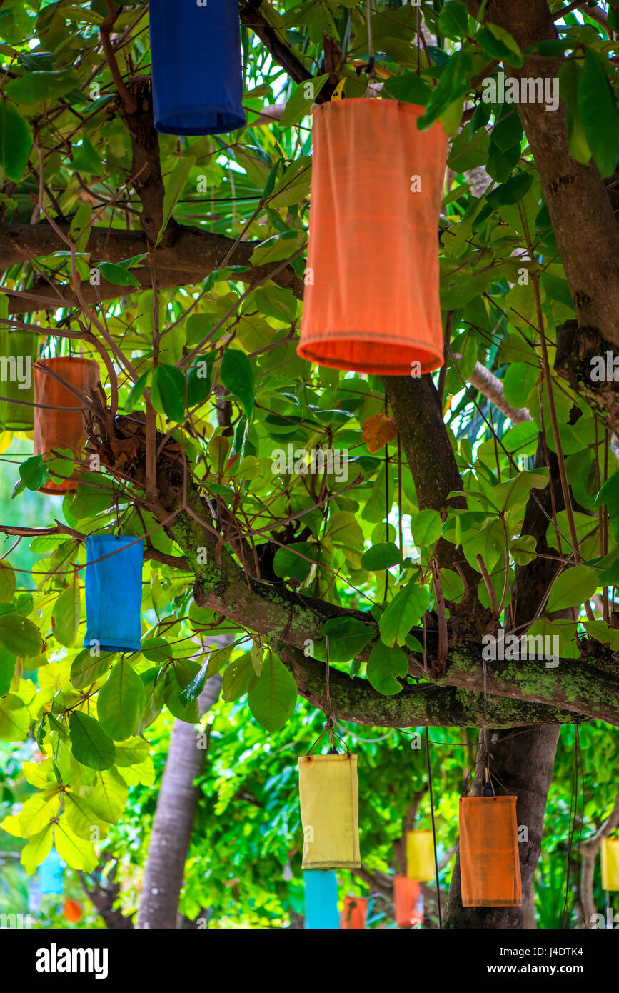 Multi-colored Asian lanterns hanging on trees for lighting at night ...