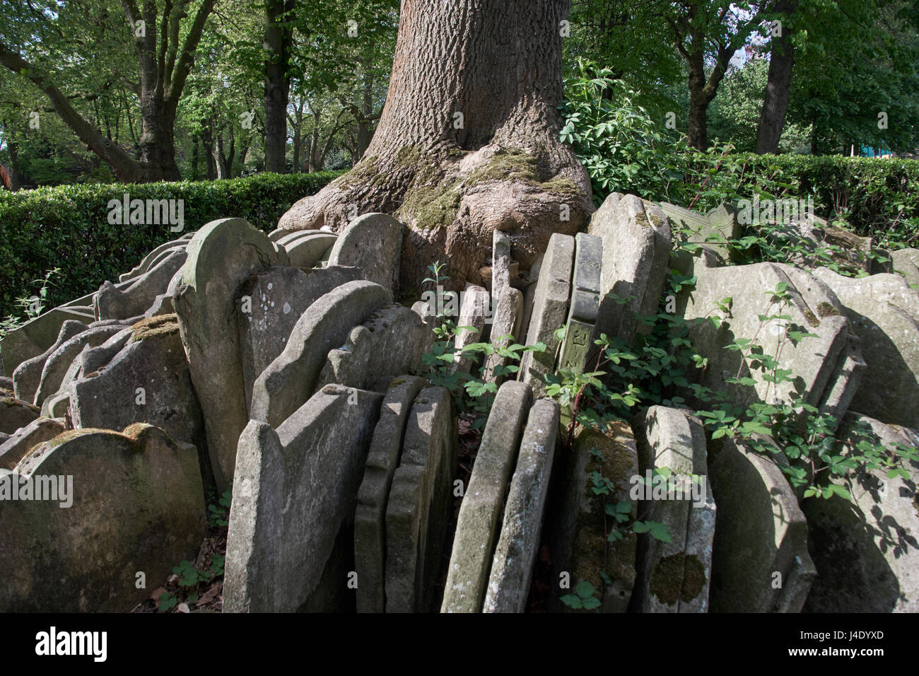 Hardy Tree in churchyard of St Pancras Old Church, London; monument created from tombstones disturbed during the - Stock Image