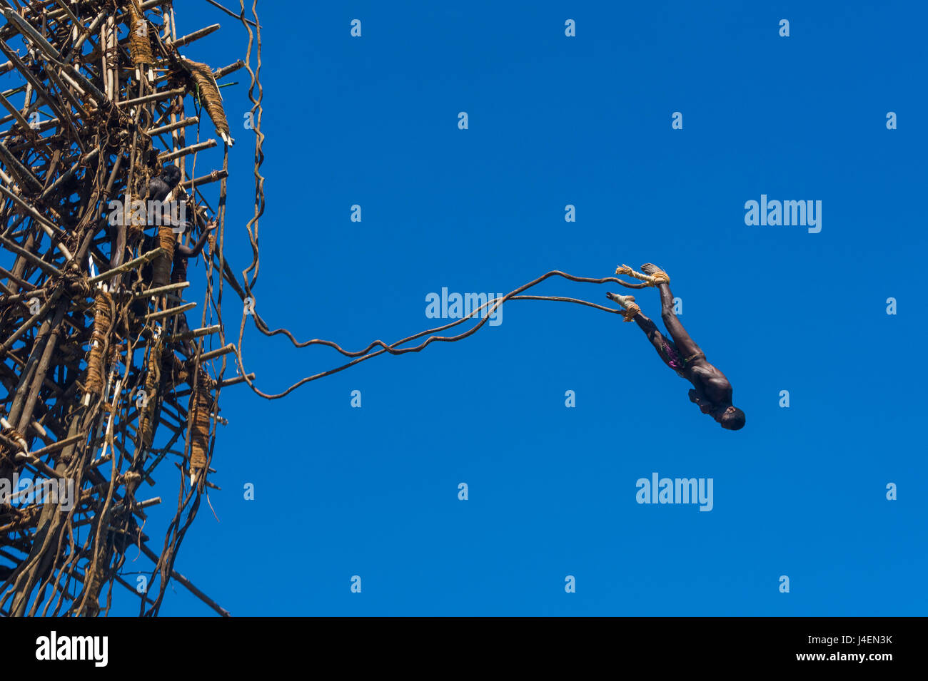Man jumping from a bamboo tower, Pentecost land diving, Pentecost, Vanuatu, Pacific - Stock Image