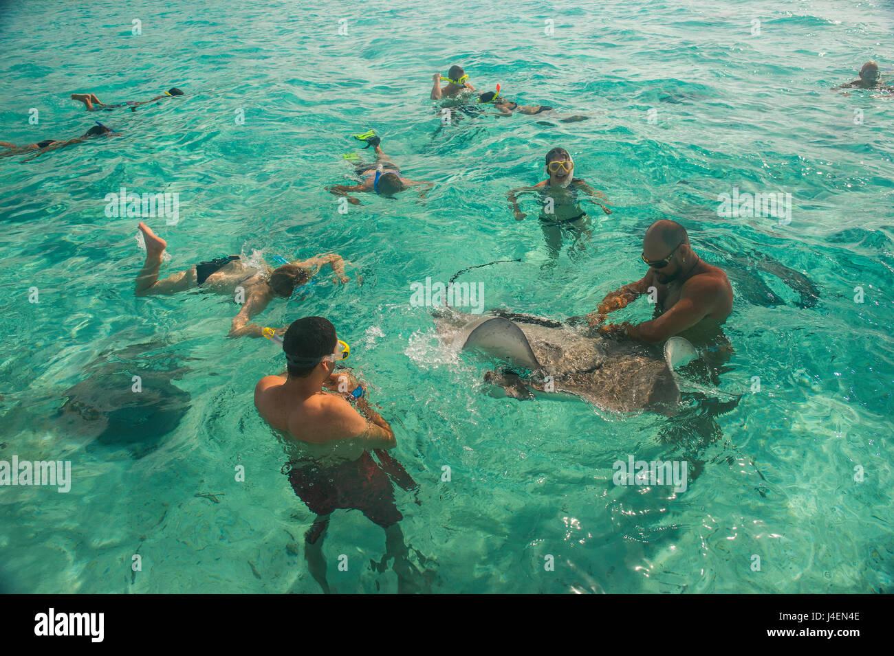 Tourists swimming with sting rays, Bora Bora, Society Islands, French Polynesia, Pacific - Stock Image
