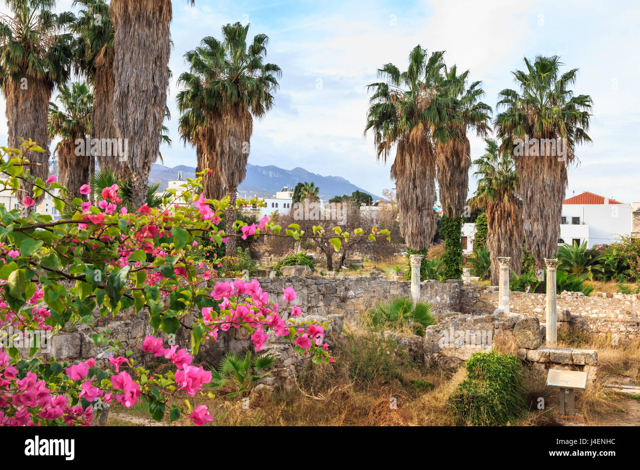 Ancient Agora, Bougainvillea and palm trees, Greek, Roman and Byzantine ruins, Kos Town, Kos, Dodecanese, Greek Islands, Greece Stock Photo