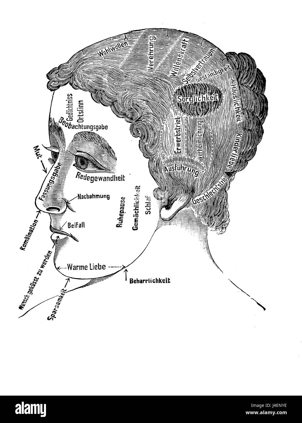 Alternative and pseudo-medicine: phrenology women cart  about the brain localization of mental functions and facial - Stock Image