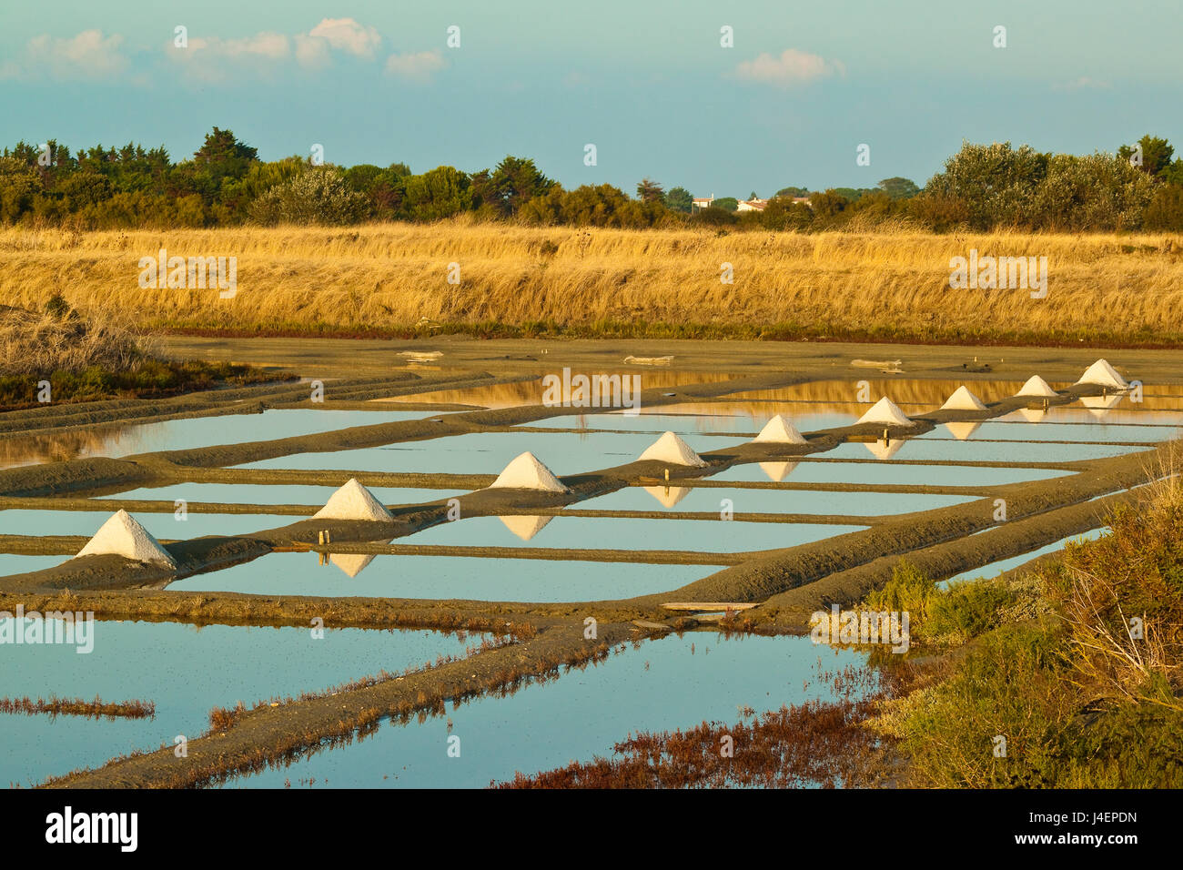 Salt pans and piles of Fleur de Sel around the Fier d'Ars marshes of the west, Ars en Re, Ile de Re, Charente - Stock Image