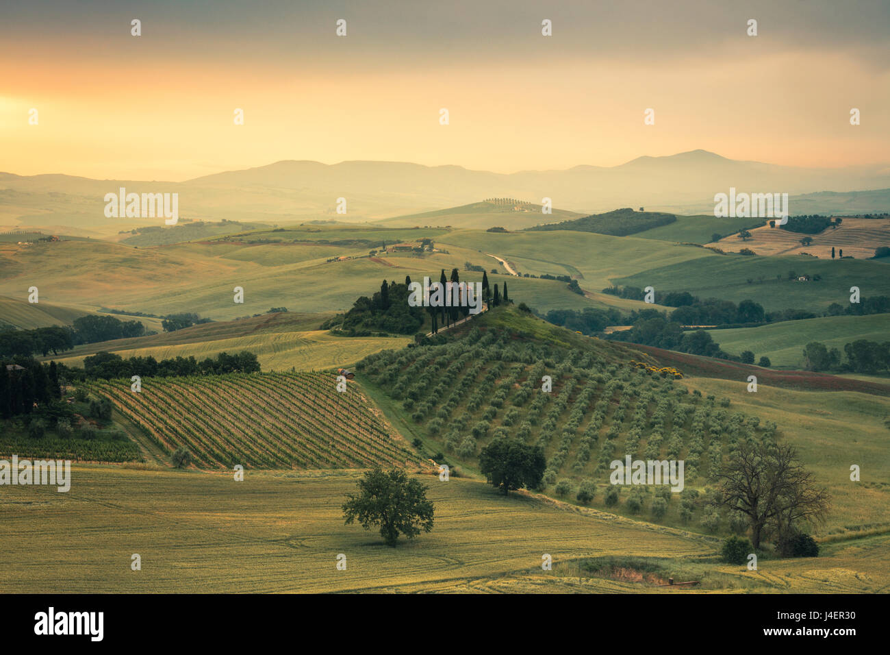 Sunrise on the gentle green hills of Val d'Orcia, UNESCO World Heritage Site, Province of Siena, Tuscany, Italy, - Stock Image