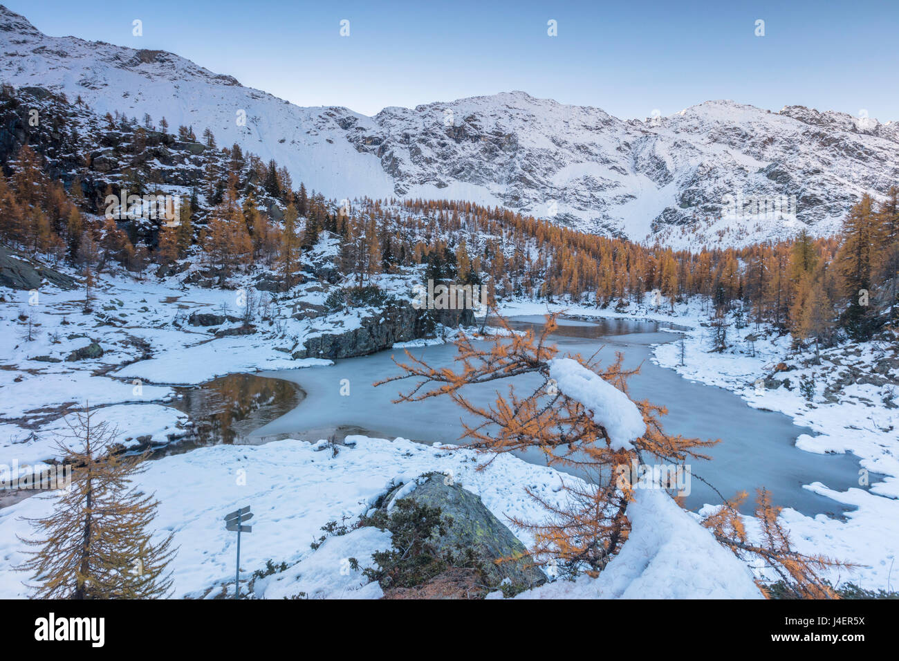 Red larches frame the frozen Lake Mufule, Malenco Valley, Province of Sondrio, Valtellina, Lombardy, Italy, Europe Stock Photo
