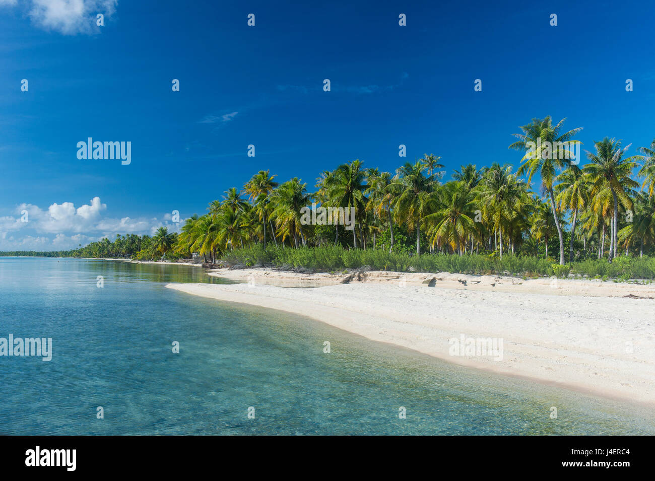 Beautiful palm fringed white sand beach in the turquoise waters of Tikehau, Tuamotus, French Polynesia, Pacific Stock Photo